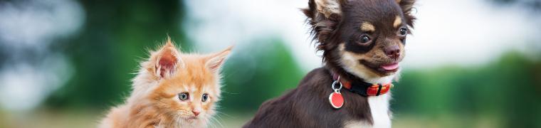 animaux domestiques nocifs pour l'environnement