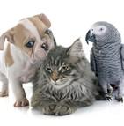 étude assurance chien chat nac