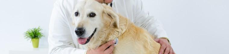 Pourquoi souscrire assurance animaux
