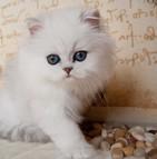 Assurance chat persan