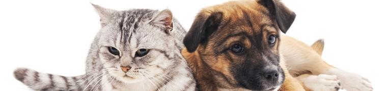 Assurance chien chat âge critères éligibilité