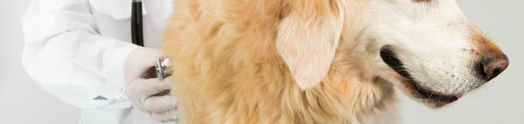 L'assurance maladie pour animaux de compagnie est disponible au Canada