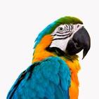 assurance pour perroquet