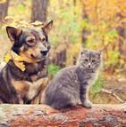 Critères pour assurer son animal de compagnie