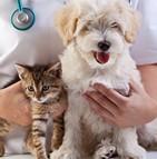 Assurances insolites des animaux