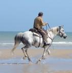 Quelle assurance pour son cheval