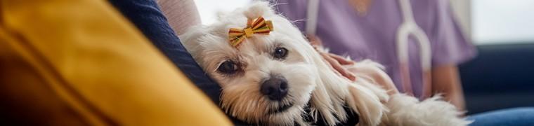 Les bienfaits de la présence animale sur les patients belges