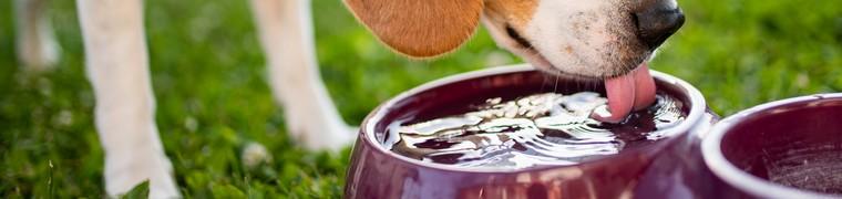 La canicule représente un danger pour les chats et les chiens