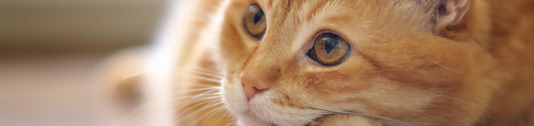 Médecine douce et santé animale, quel remboursement par les mutuelles ?