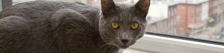 Les chats élevés en appartement sont plus sujets à des troubles du comportement