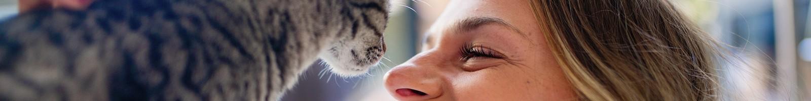 Les chats autant que les chiens peuvent se montrer très affectueux envers leurs maîtres