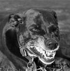 Différence assurance et mutuelle chien d'attaque