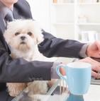 Les animaux de compagnie ont, comme leur appellation, par définition un rôle d'amis, de supporteurs, et même de partenaires dans la vie de leur maître.