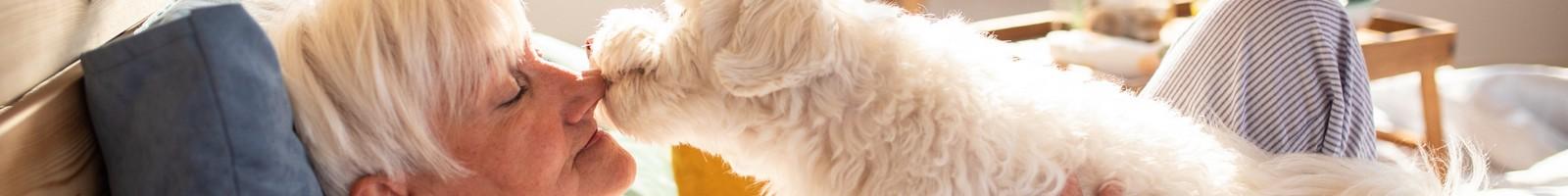 Des chiens dressés pour tenir compagnie aux personnes souffrant de maladie d'Alzheimer