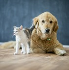 Les chiens sont souvent achetés tandis que les chats donnés ou trouvés
