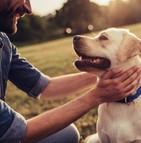 Le décès de son chien serait aussi éprouvant que la perte d'un proche