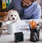 Davantage d'entreprises intègrent des animaux domestiques dans leurs locaux