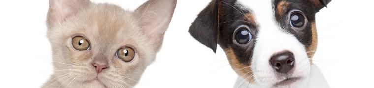Français assurance santé animale