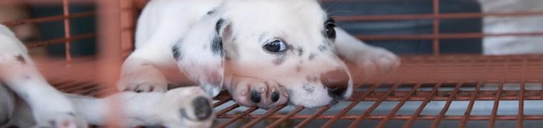En France, la vente d'animaux en animalerie est très encadrée