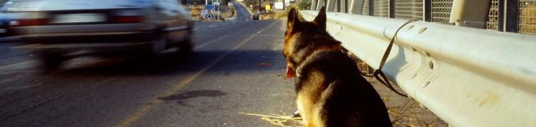 Une future proposition de loi vise à mettre fin aux abandons d'animaux de compagnie
