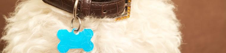 L'identification des chiens : une pratique vivement encouragée