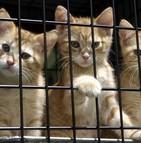 La lutte contre le trafic d'animaux de compagnie commence à prendre forme en Europe