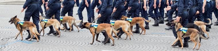 Des Marseillais veulent créer une maison de retraite pour chiens policiers