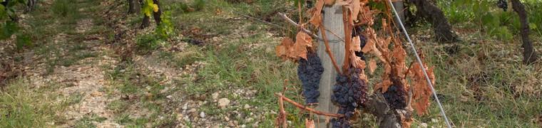 Pas moins de 3 000 communes françaises sont enregistrées en état de catastrophe naturelle