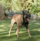 Morsure chien catégorie 2