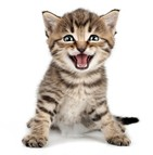 La mutuelle pour chaton