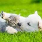 Assurance pour chiots et chatons