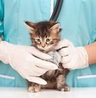 Les mutuelles allègent les besoins de soins coûteux des animaux de compagnie