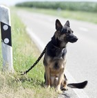 Le nombre d'animaux domestiques abandonnés augmente considérablement en été