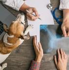 L'ostéoarthrite (OA) chez les chiens : les symptômes et les traitements
