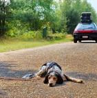 Le phénomène d'abandons d'animaux prend de l'ampleur durant la période estivale