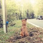 Une plateforme fournit des conseils pour lutter contre l'abandon des animaux de compagnie