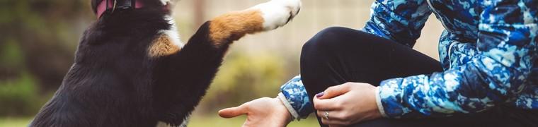 Pourquoi dressons-nous des chiens ?