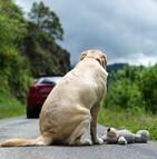 Une première journée mondiale contre l'abandon des animaux de compagnie
