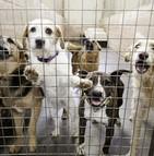 Une proposition de loi vise à renforcer la lutte contre l'abandon d'animaux domestiques