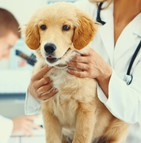Les propriétaires dépensent sans compter pour la santé de leur animal domestique