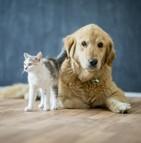 Quel animal domestique est éligible à l'achat auprès d'une animalerie californienne ?