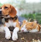 La région wallonne durcit les règles pour la possession d'animaux