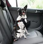 Sécuriser ses animaux de compagnie dans un véhicule limite les risques d'accidents