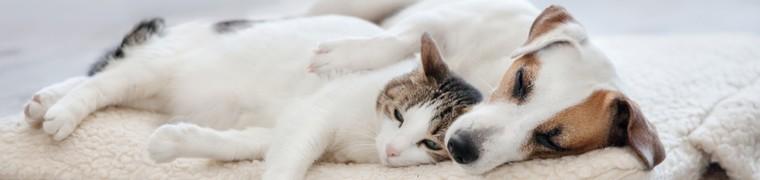 La salive des chiens et des chats serait mortelle pour l'Homme
