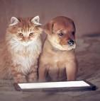 La e-santé s'applique aussi aux animaux