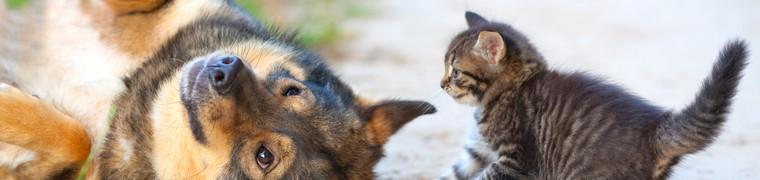 Seuls 5 à 6% animaux de compagne assurés en France
