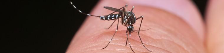 signalement moustique tigre