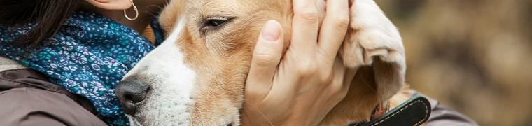Le stress du chien reflète celui de son maître