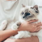 Les Suisses affectionnent particulièrement les chats