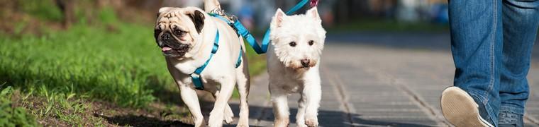 Les « Uber pour chien » enchaînent scandale sur scandale